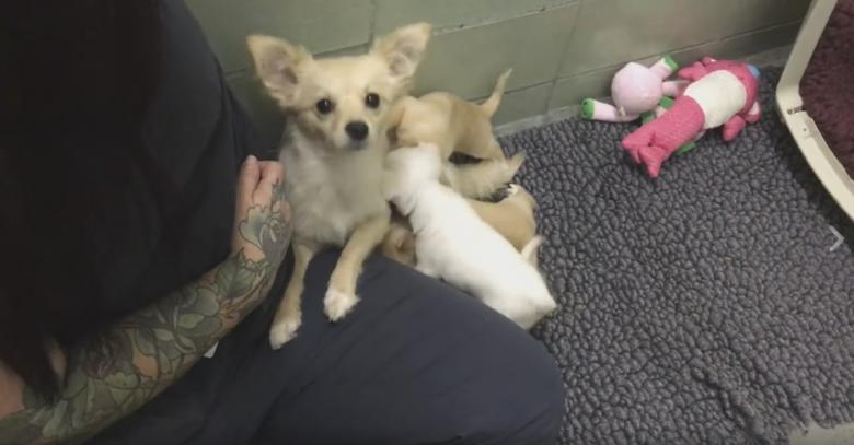 Marin Humane Society Dog Reunited With Puppies