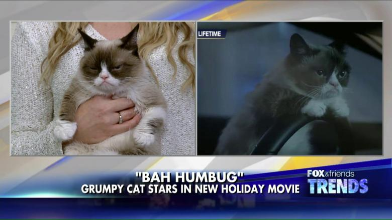 Grumpy cat now has her own movie fox news insider grumpy cat now has her own movie fox news insider thecheapjerseys Choice Image