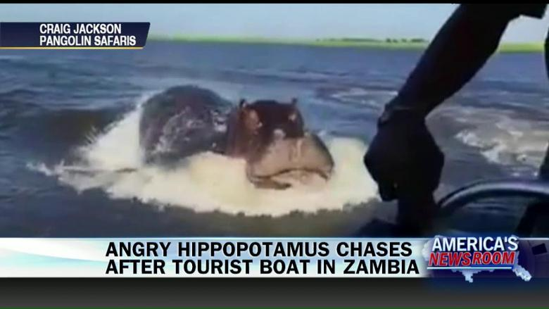 Watch Safari Tour Boat Just Barely Avoids Enormous Angry