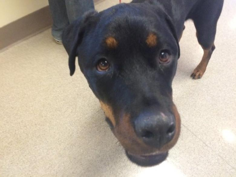 3D mapping helped save this Rottweiler's life after she was hit by a car.